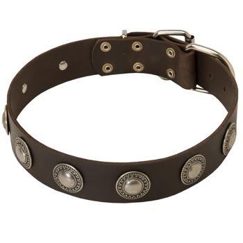 Training Leather   Amstaff Collar for Stylish Dogs