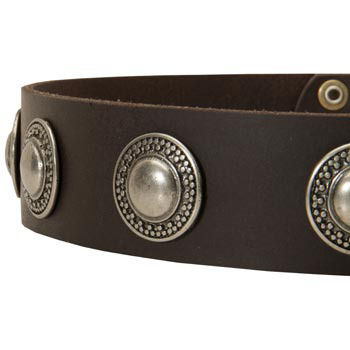 Leather Dog Collar with Conchos for   Amstaff