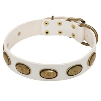 White Leather Amstaff Collar with Vintage Oval Plates