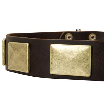 Leather Dog Collar with Massive Brass Plates for Amstaff