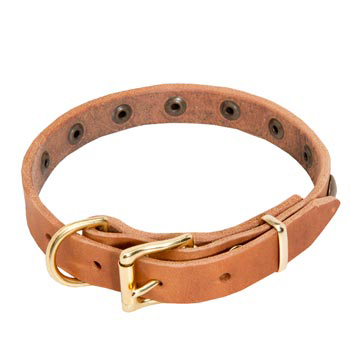 Amstaff Leather Collar with Studs