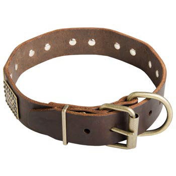 War-Style Leather Collar for Amstaff