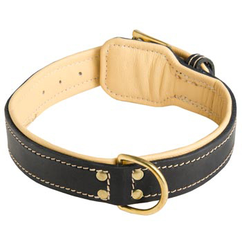 Leather Dog Collar Padded for Amstaff Off Leash Training