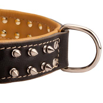 Padded Leather Amstaff Collar Spiked Adjustable for Training