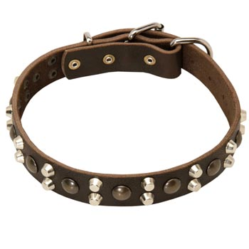 Leather Collar for Amstaff Stylish Walks