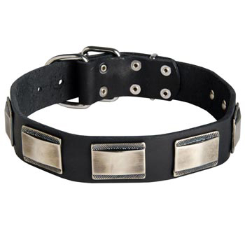 Leather Amstaff Collar with Solid Nickel Plates