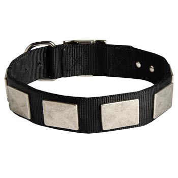 Amstaff Collar Nickel Vintage with Plates