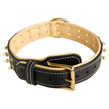 Leather Dog Collar Spiked Adjustable for Amstaff Walking