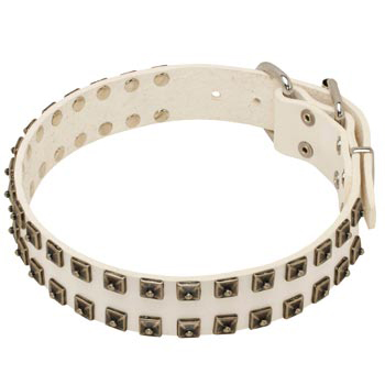 Studded White Leather Dog Collar for Amstaff