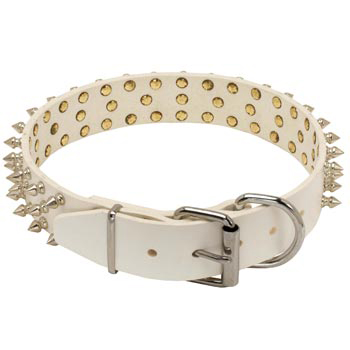 Spiked Leather Amstaff Collar