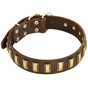 Leather Dog Collar with Adornment for Amstaff