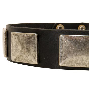 Wide Leather Amstaff Collar for Walking