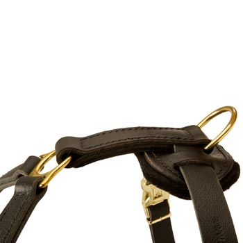 Corrosion Resistant D-ring of Amstaff Harness