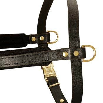 Training Pulling Amstaff Harness with Sewn-In Side D-Rings