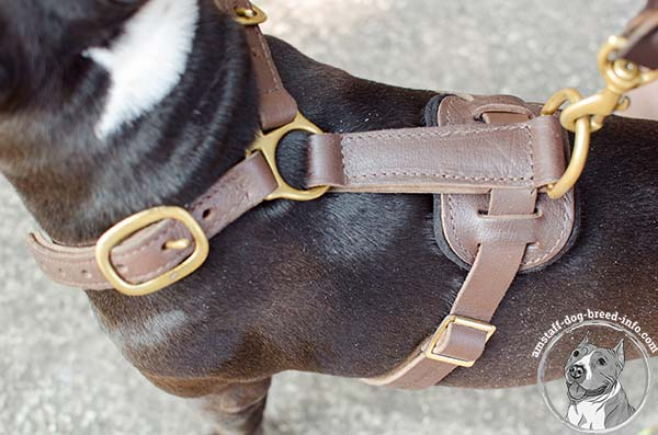 Amstaff leather harness with durable hardware