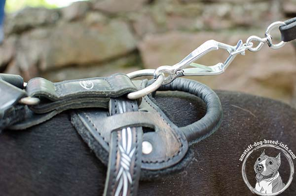 Amstaff leather harness adjustable  with d-ring for leash attachment for better comfort