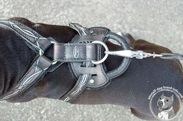 Amstaff leather harness