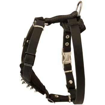Amstaff Leather Harness for Puppy Walking and Training