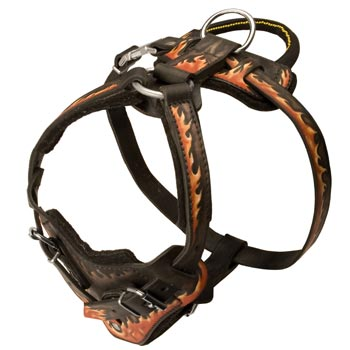 Leather Dog Harness with Handle for Amstaff Training