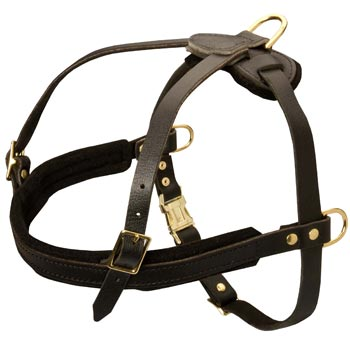 Leather Amstaff Harness for Dog Off Leash Training