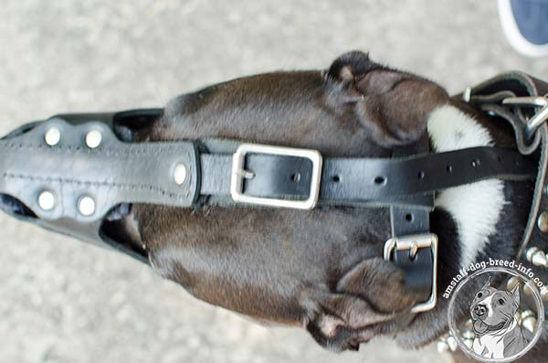 Amstaff leather muzzle easy to adjust