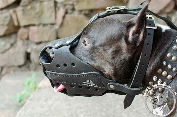 Amstaff leather muzzle for heavy duty training
