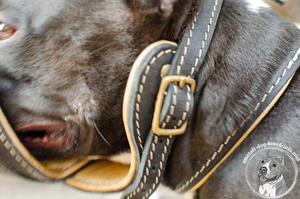 Amstaff leather muzzle with durable fittings for stylish walks