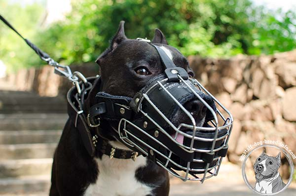 Easy to breathe wire cage Amstaff muzzle