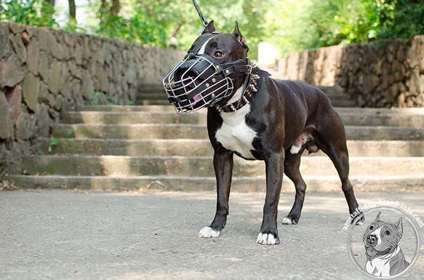 Amstaff wire cage muzzle with rust-resistant fittings for perfect control