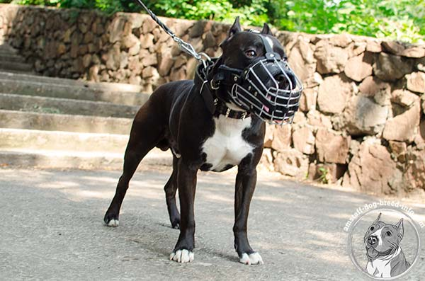 Amstaff wire cage muzzle with durable hardware for daily activity